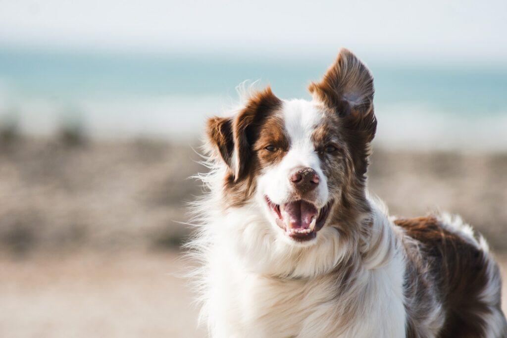 happy vegan dog