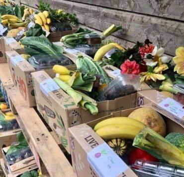 riverford veg boxes